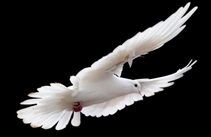 animal totems, animal totem meanings, bird meanings, symbolic birds
