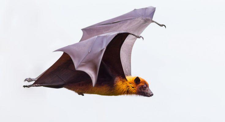 animal symbolism bat meaning