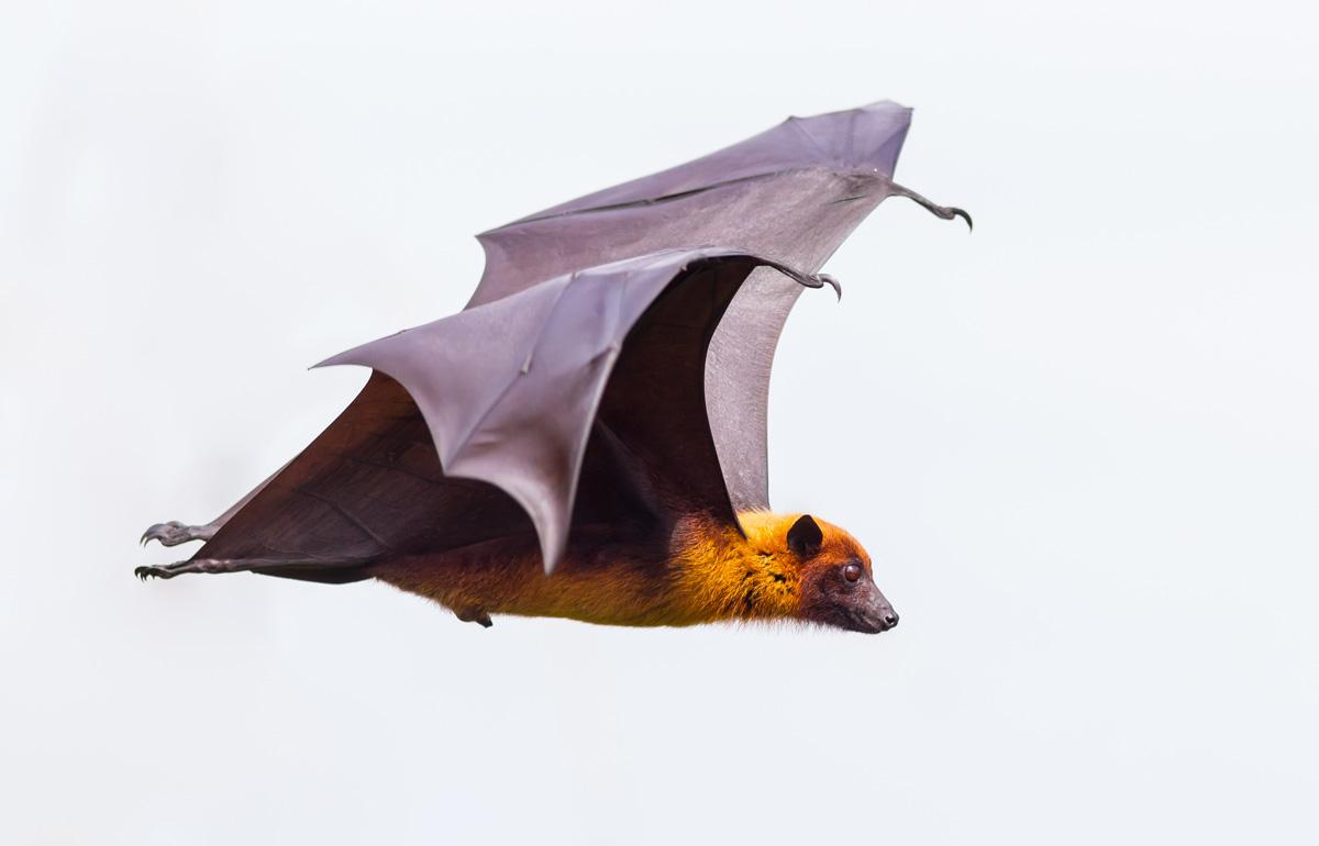 Animal Symbolism Bat