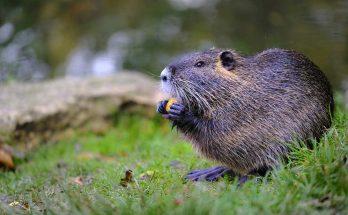 Symbolic Beaver Meaning