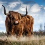 bull symbols, bull meaning, animal symbols, animal symbolism