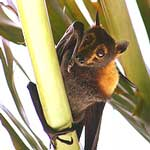 good luck symbols animals bat meaning