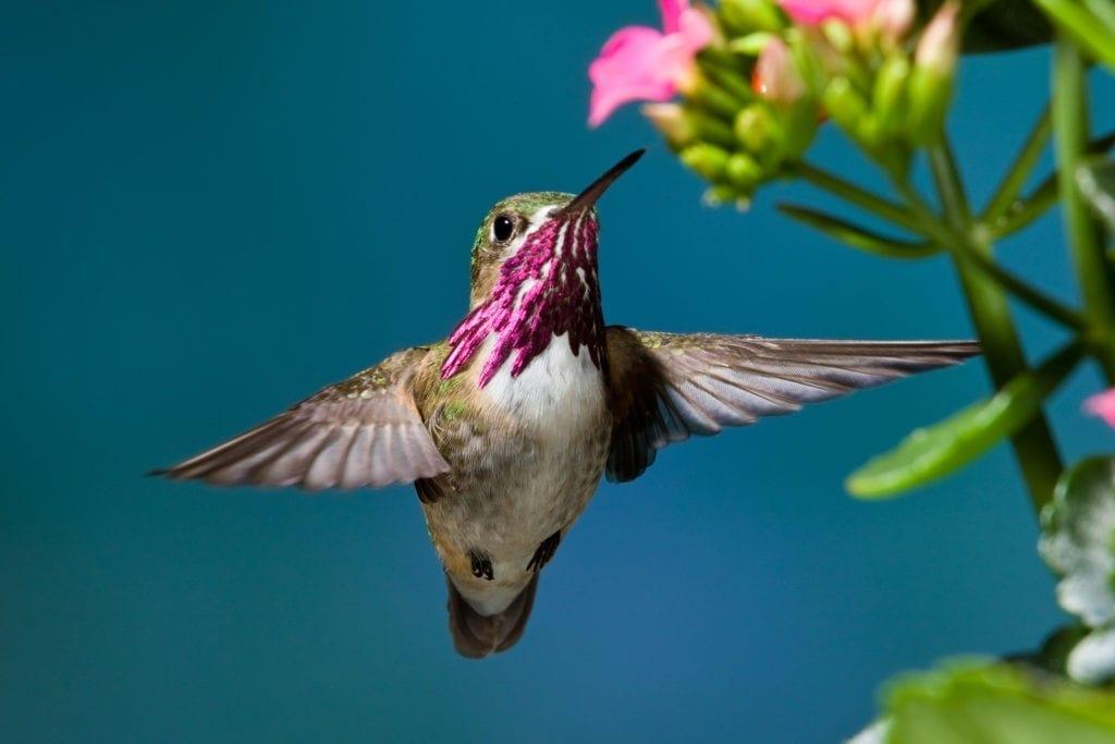 hummingbird meaning