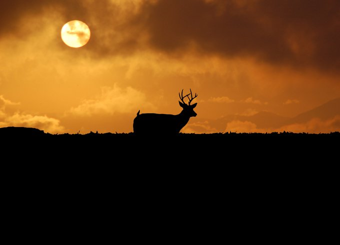 animal symbolism deer meaning in dreams
