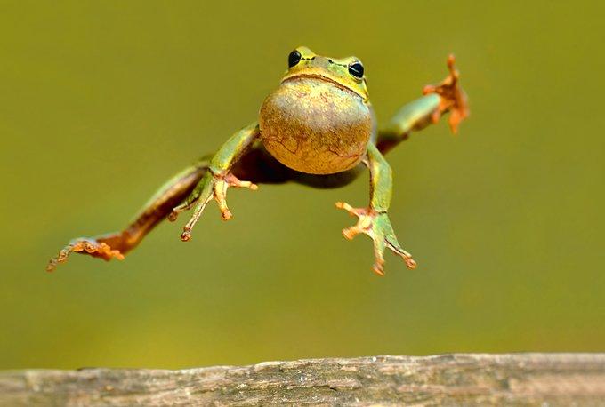 animal symbolism frog meaning