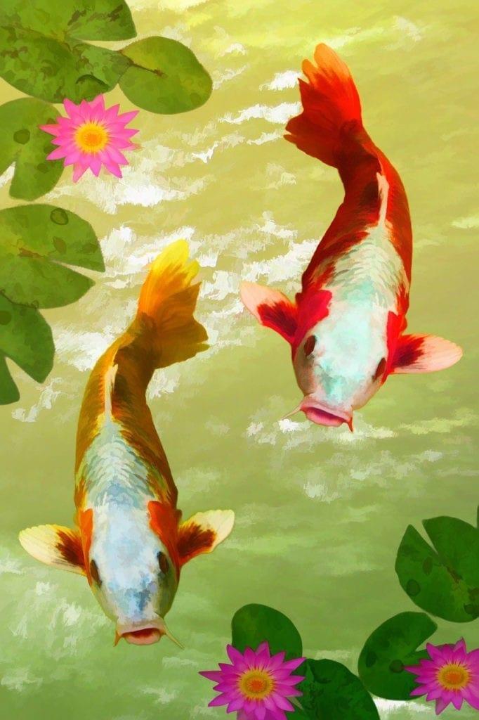 animal symbolism Japanese koi fish meaning