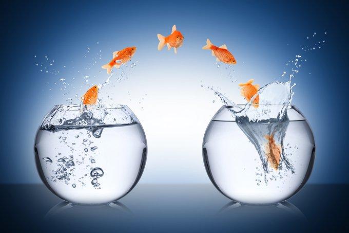 animal symbolism fish meaning