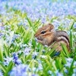 animal symbolism of spring - animal signs of spring