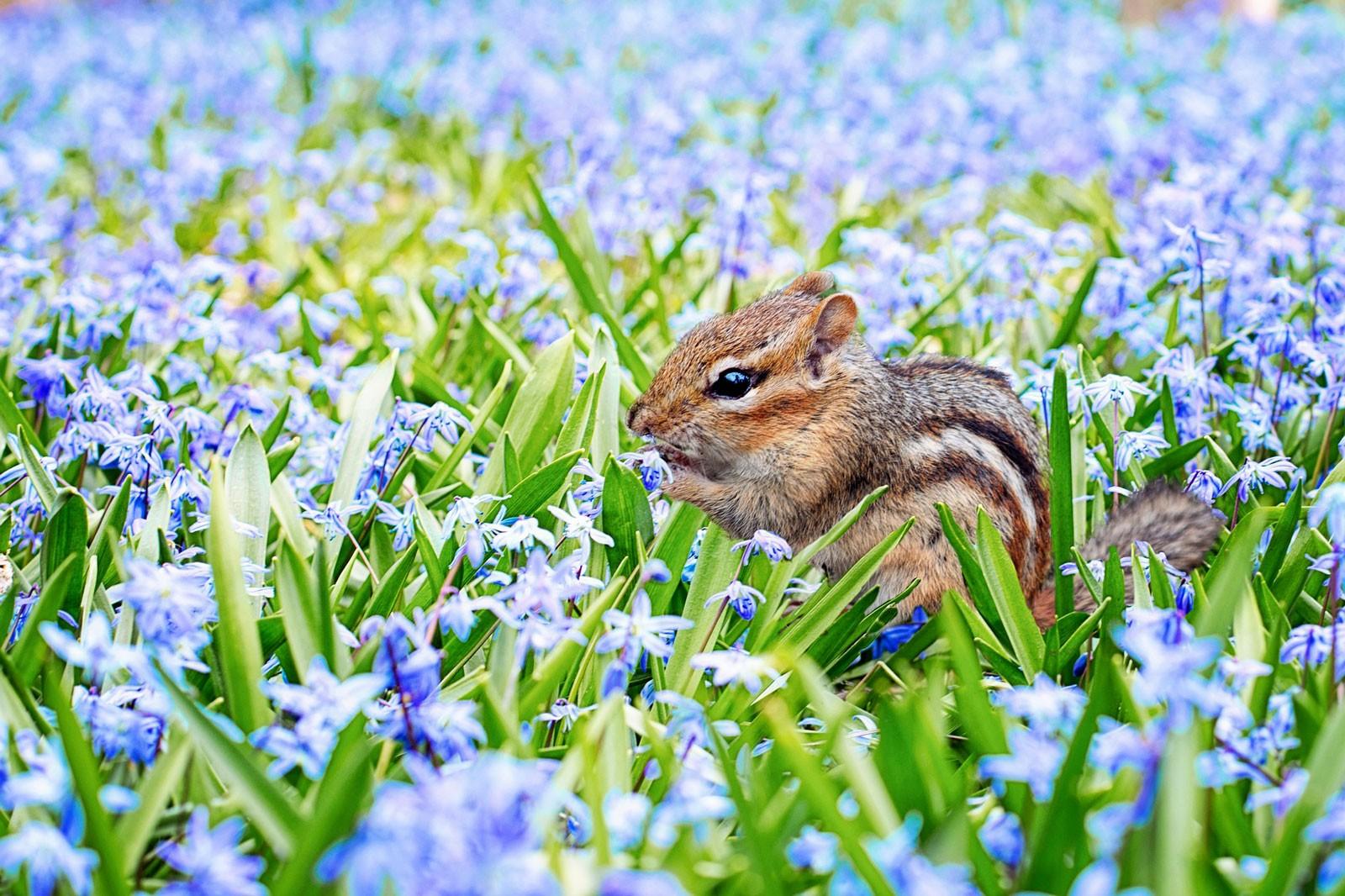Animal Symbolism Of Spring