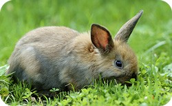 animal symbolism of spring and rabbit meanings
