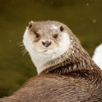 animal symbolism otter meanings