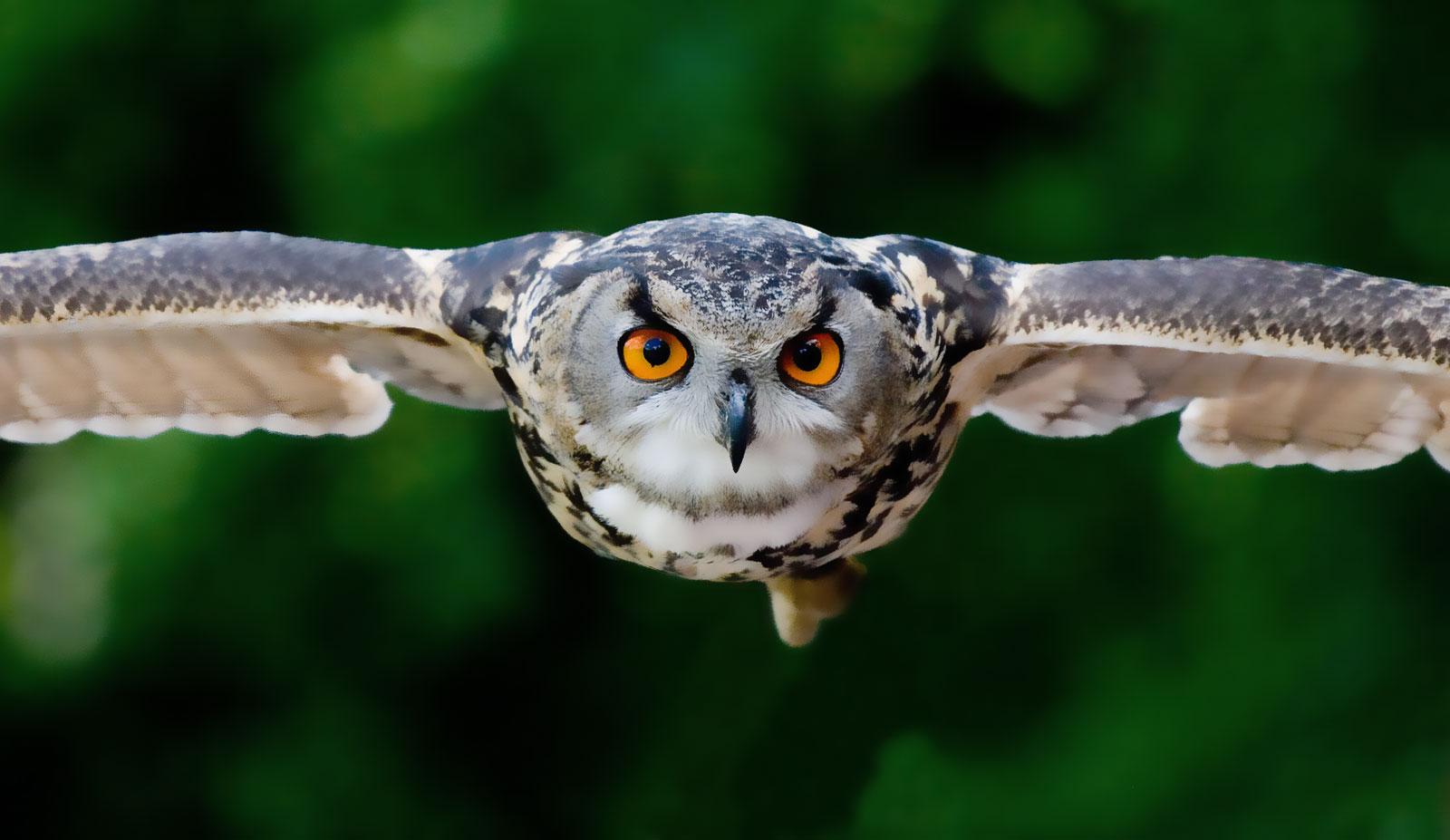 animal symbolism owl meaning