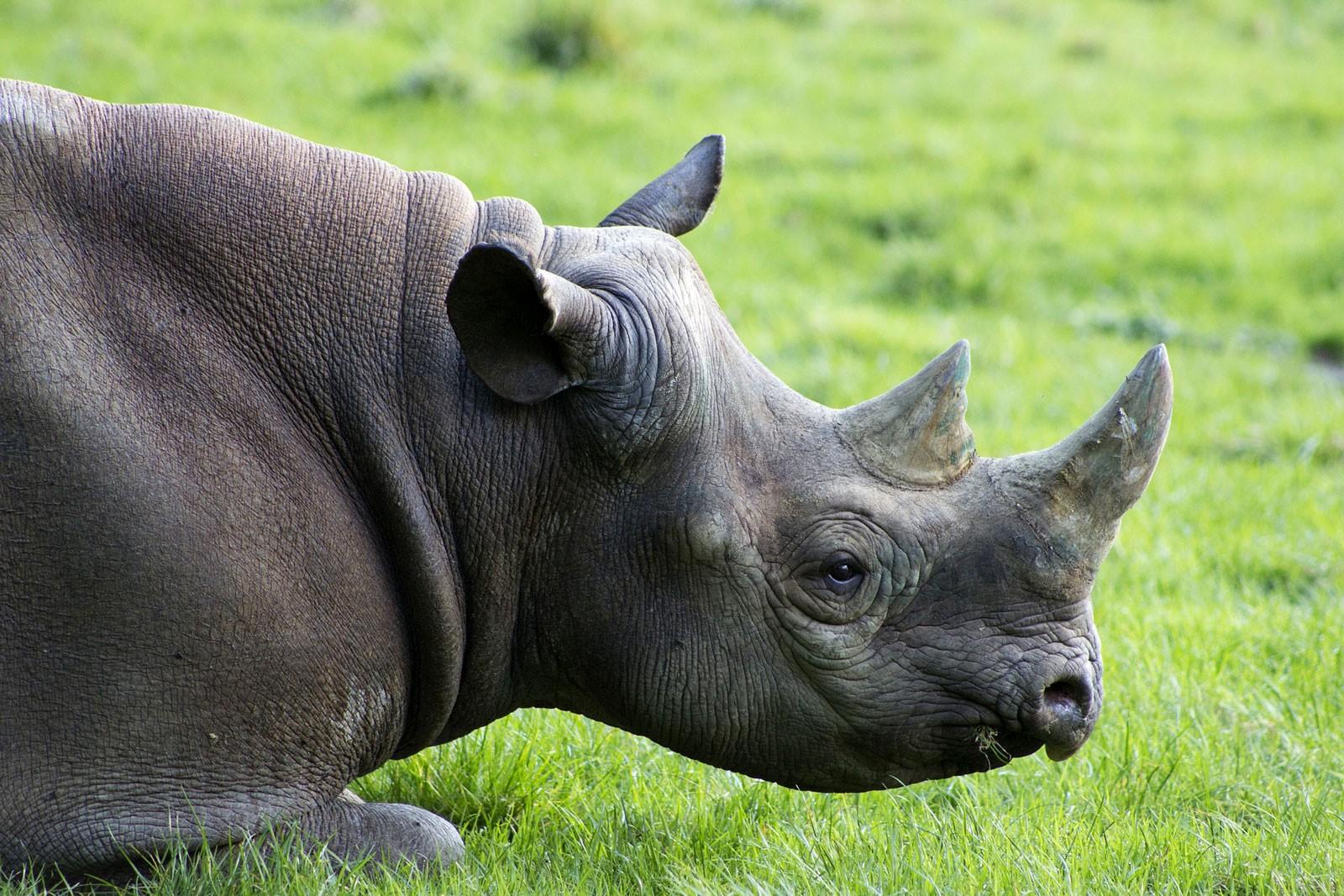 Animal Symbolism Rhinoceros