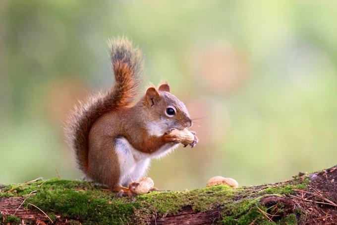 animal symbolism squirrel meanings