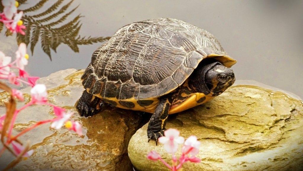 animal symbolism turtle meanings