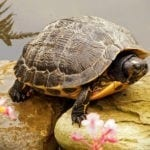 animal symbolism turtle meanings