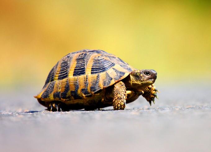 animal symbolism turtle meaning and motherhood