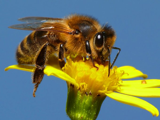 symbolic bee meaning