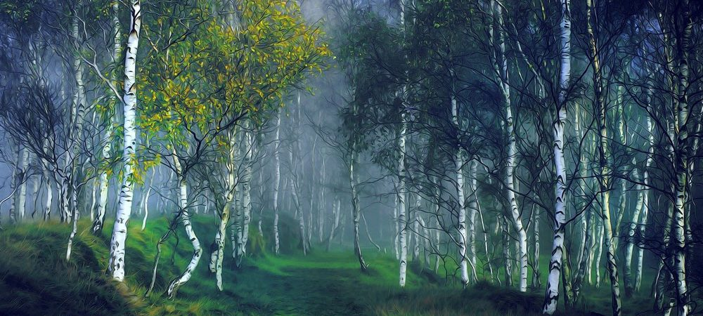 celtic meaning of the birch tree