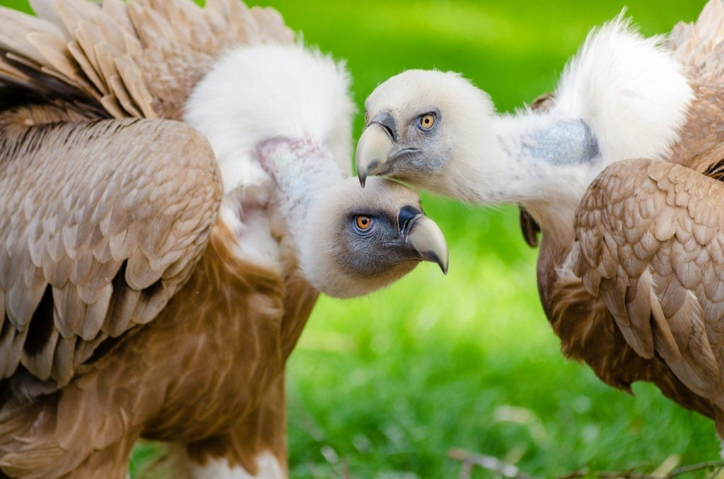 bird meaning vulture meanings