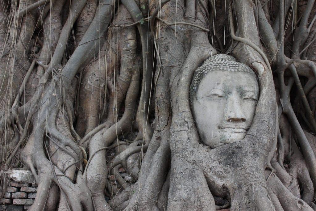 bodhi tree symbolism