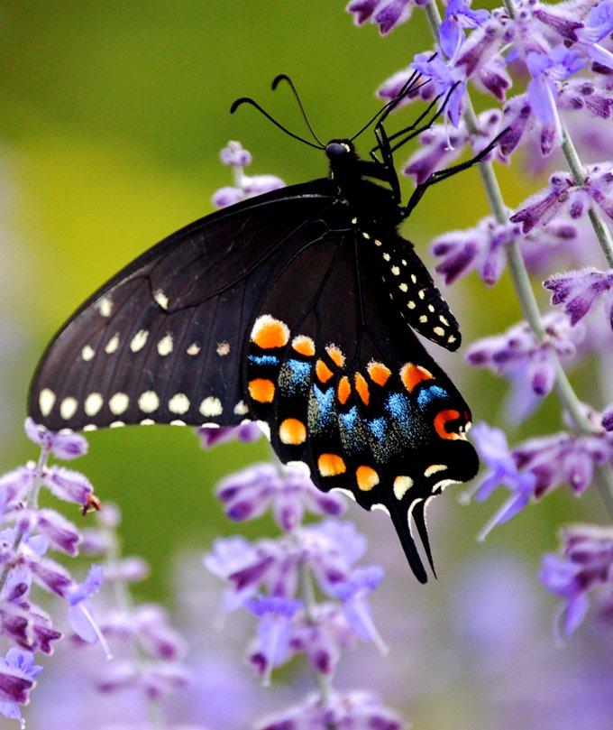 butterfly animal symbolism