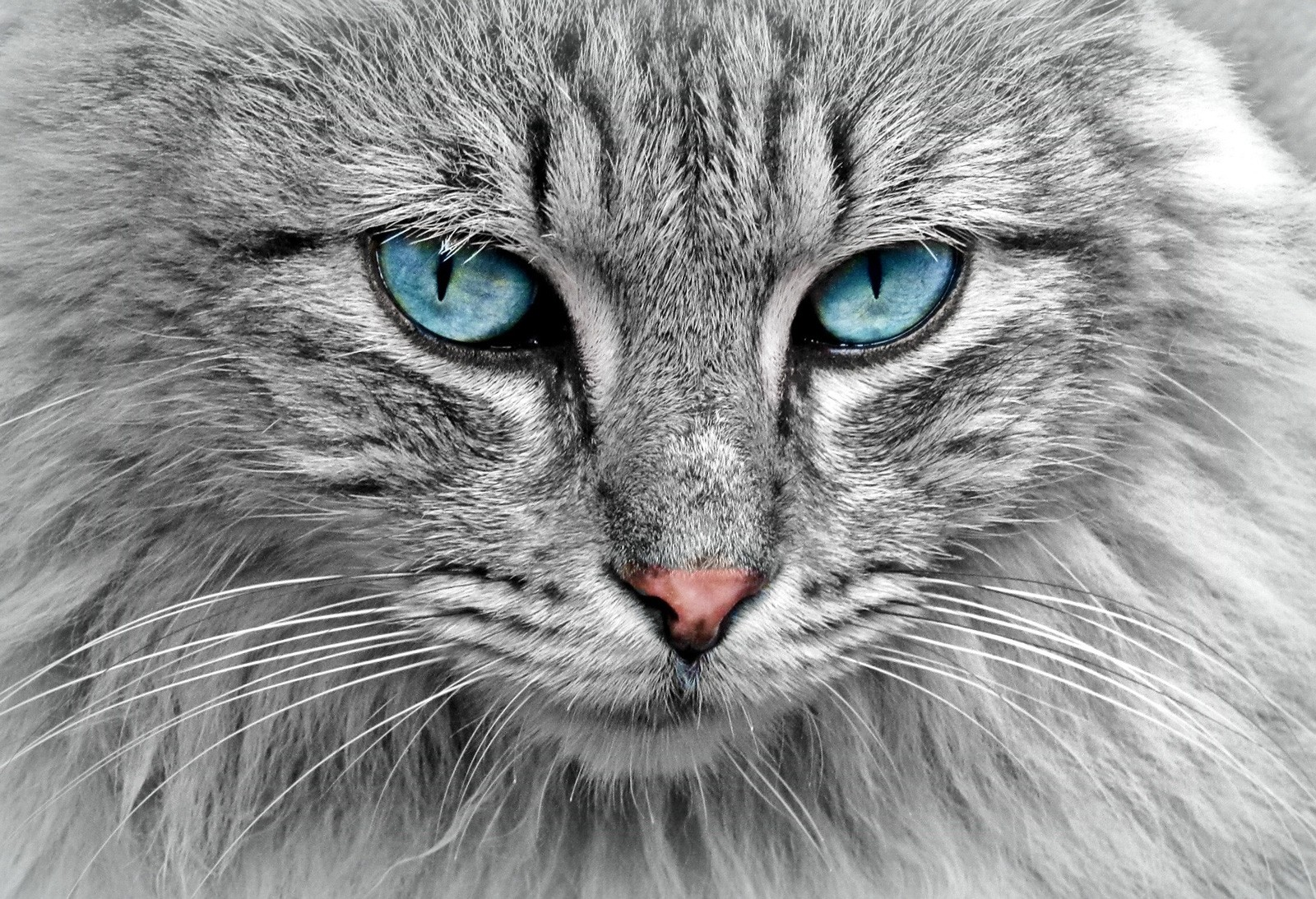 cat tattoo ideas and cat meaning
