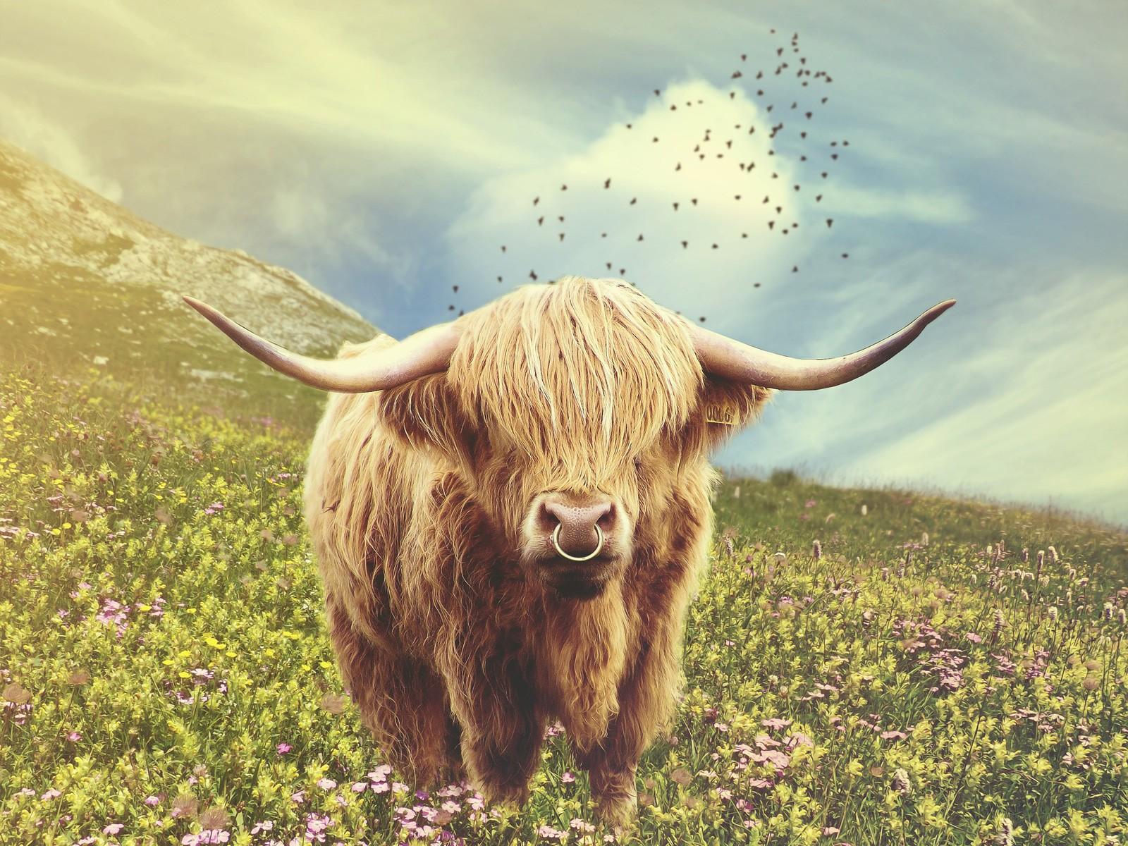 Celtic Zodiac Sign Bull Cow