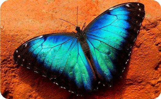 Celtic zodiac butterfly meaning