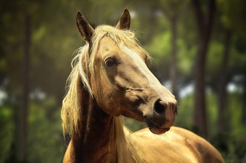 Celtic zodiac sign horse meaning