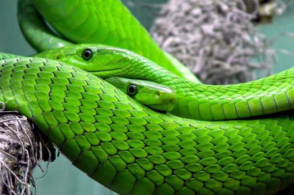 Celtic Zodiac Sign Snake meanings