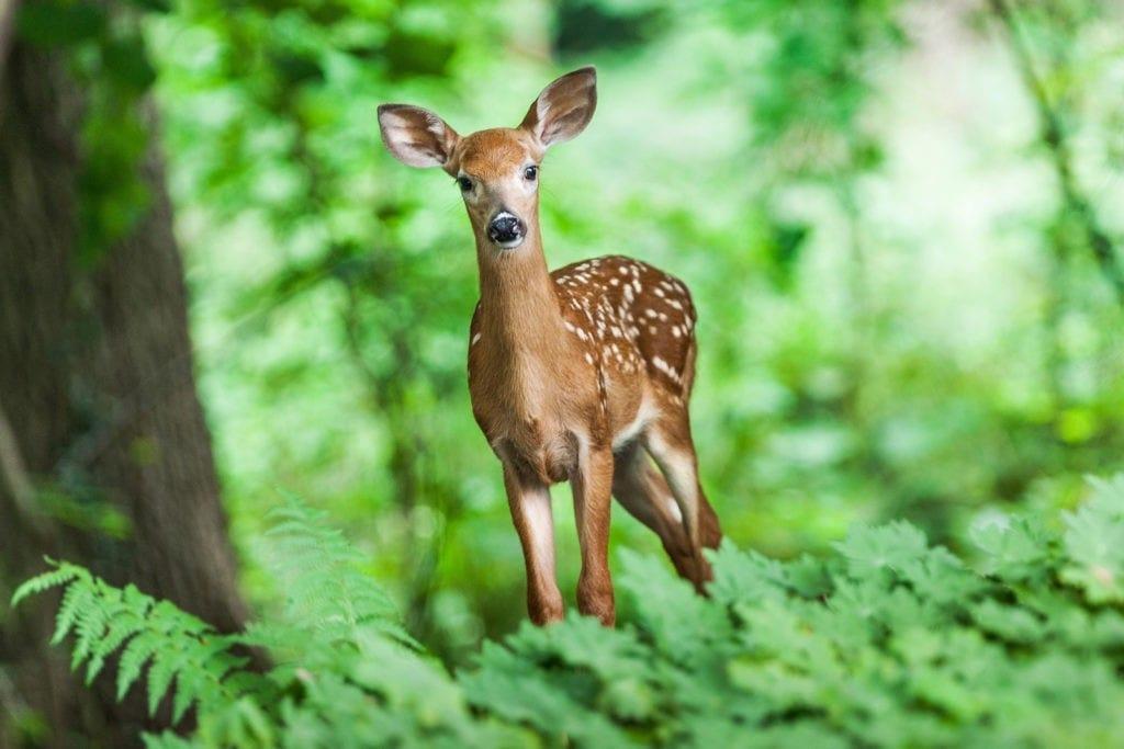 Celtic zodiac sign deer meaning