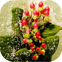 Christmas symbols and Christmas symbolism