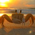 crab animal symbolism
