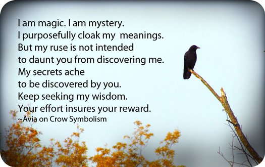Crowsymbolism2 Whats Your Sign