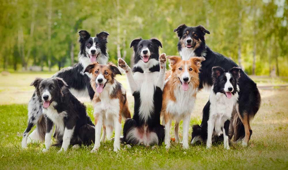dog meaning and dog symbolism