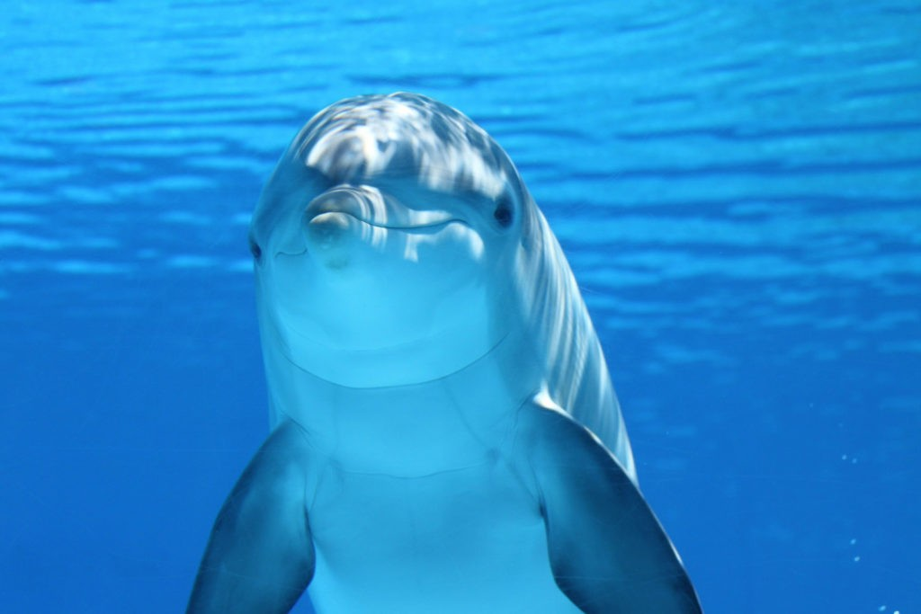 dolphin meaning and dolphin symbolism