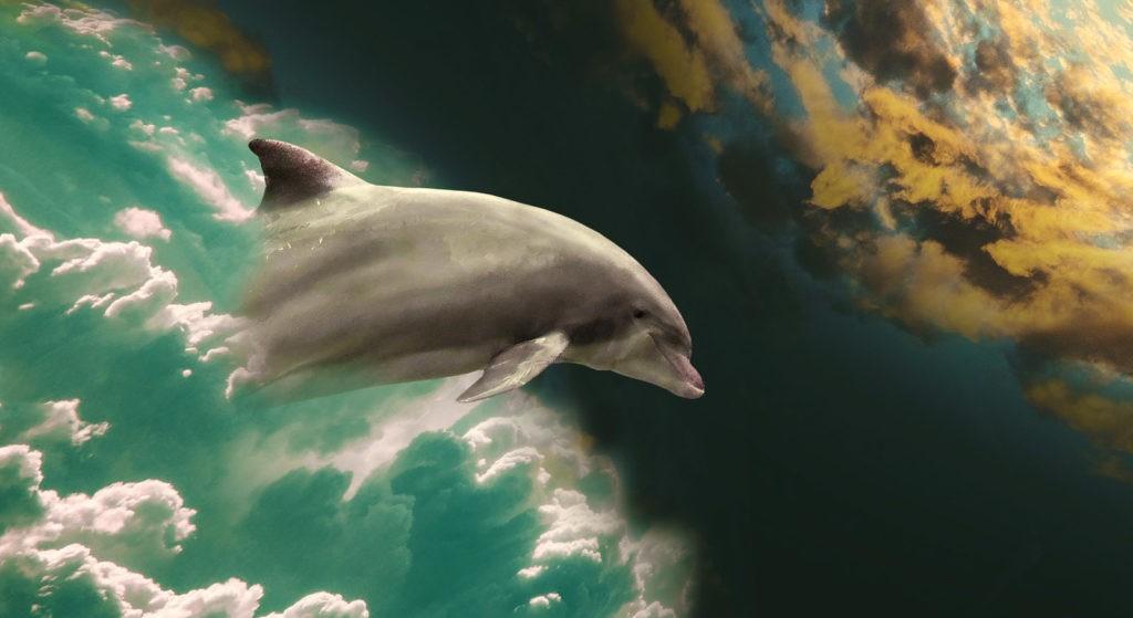 dolphin tattoo ideas