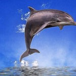 dolphin tattoo ideas and dolphin meaning