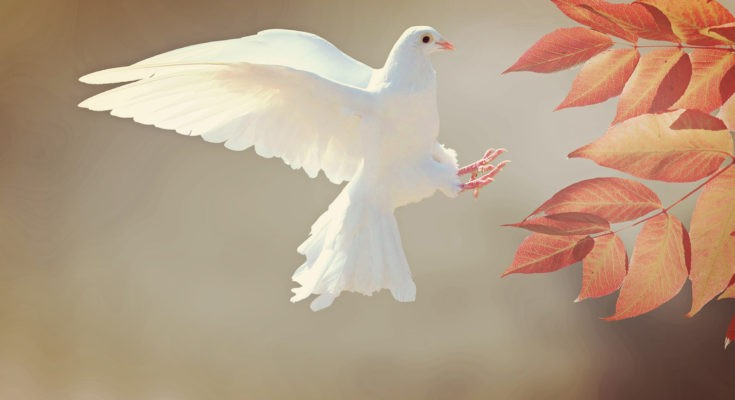 dove symbolism and dove meaning