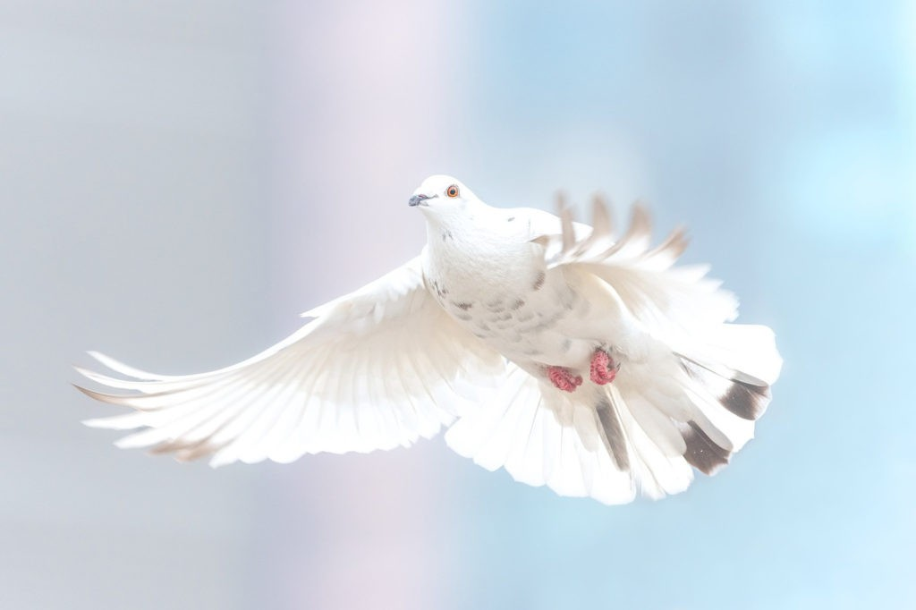 dove tattoo ideas and symbolic dove meanings