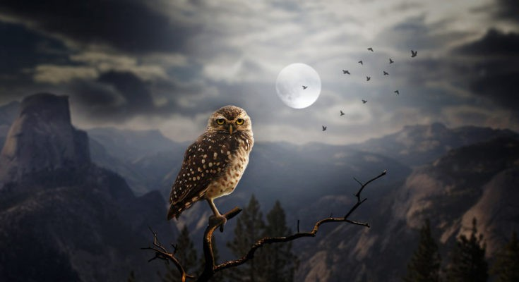 dream meanings of animals and introduction to dreaming of animals