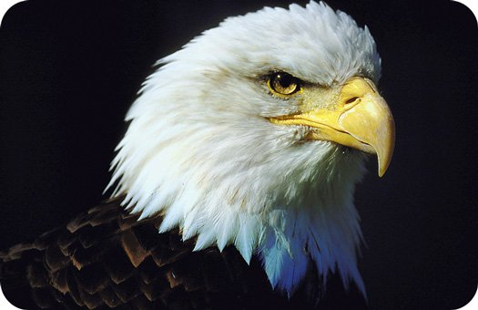eagle tattoo ideas and eagle meaning