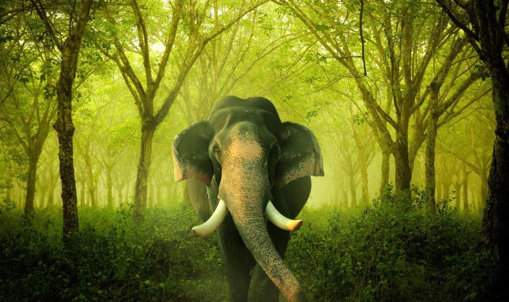symbolic elephant meaning