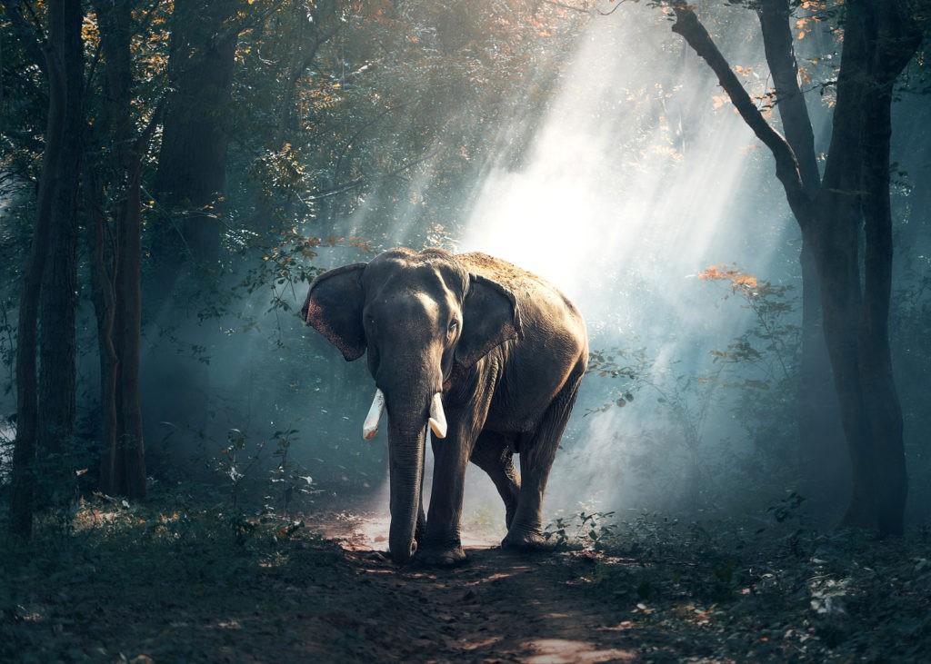 elephant totem meaning