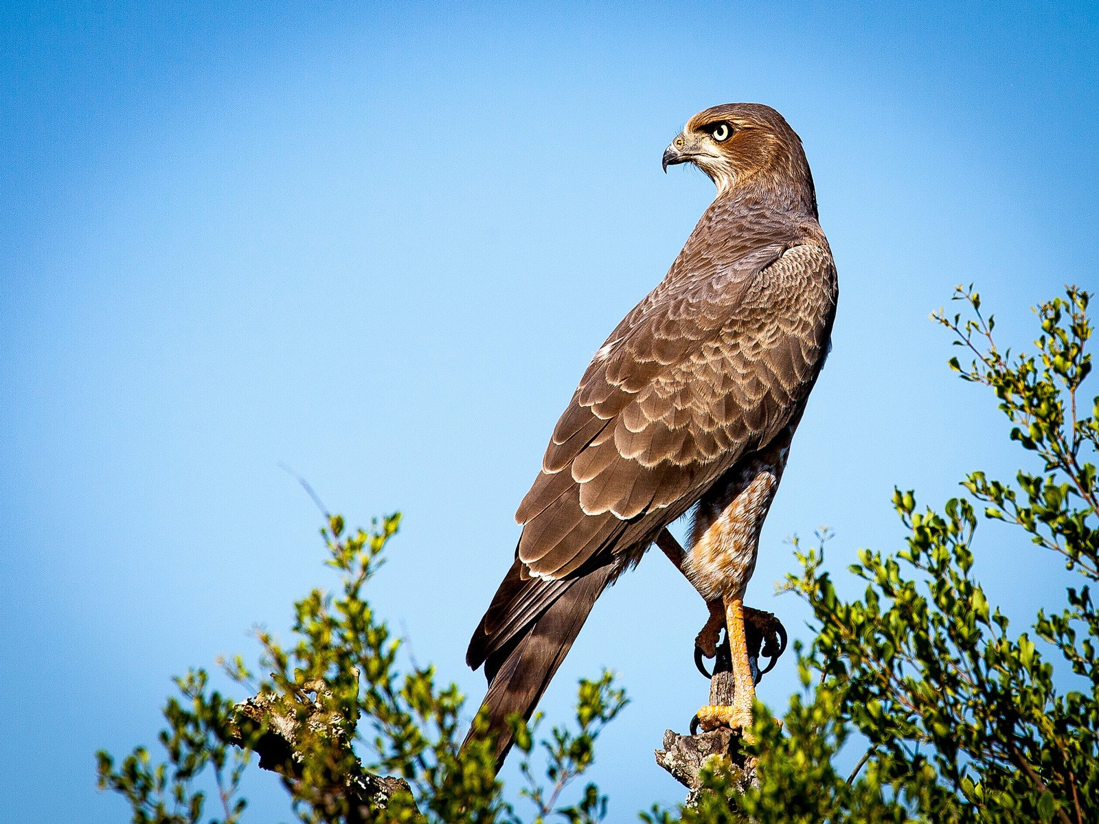 Falcons And Ravens Meaning Of Conflict On Whats Your Sign