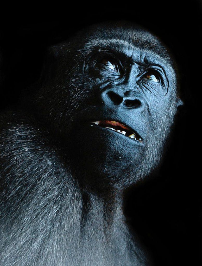 Gorilla meaning animal symbolism