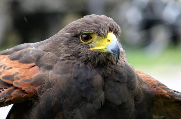 hawk symbolic meaning