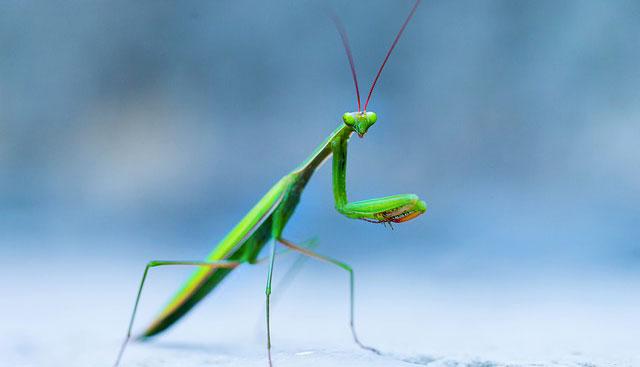 Animal Symbolism Mantis