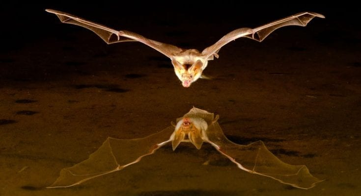 Law of attraction and bat meanings